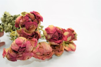 Sušené květiny PIVOŃKA KORÁLOVĚ ČERVENÁ