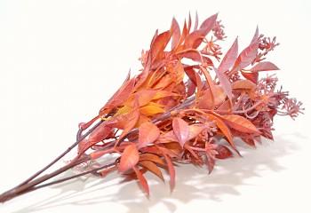 RUSCUS S PUPENY, podzimní dekorace