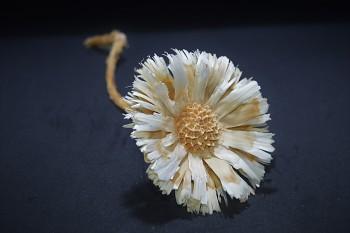 Sušené květiny PROTEA SUPERCUT BÍLÁ