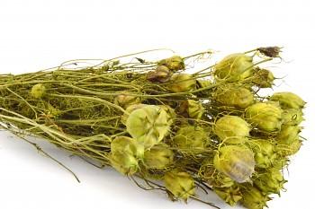Suché a sušené květiny NIGELLA DAMASCENA ZELENÁ