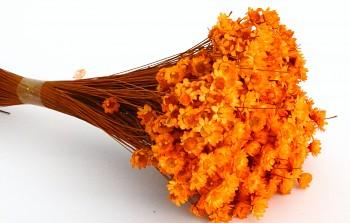 Suché a sušené květiny GLIXIA ORANŽOVÁ