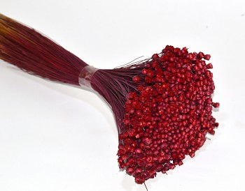 glixia tmavě červená, sušené květy