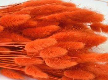 Suché a sušené květiny na aranžování Lagurus oranžový