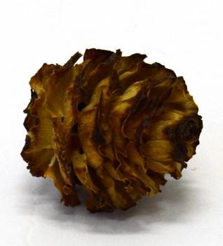 Sušené plody GLABRUM CREAM, suché plody na aranžování