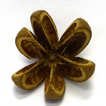 Sušené plody WILD ORANGE, suché plody na aranžování