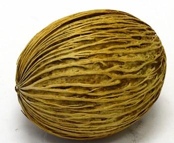 Suché plody Mintola ball washed, sušené plody na aranžování