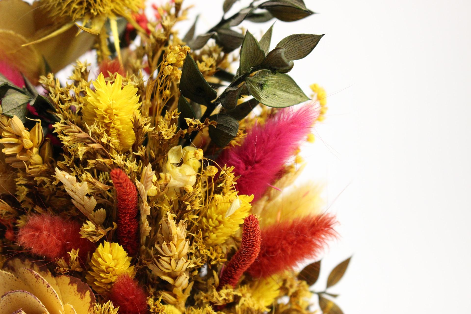 suché a sušené květiny