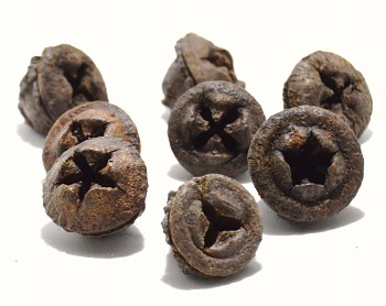 Sušené plody LOTOS MINI STŘÍBRNÝ, suché plody na aranžování