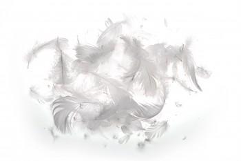 Barevné peří bílé