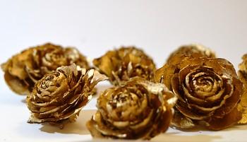 Suché plody Cedrová růže zlatá, sušené plody na aranžování