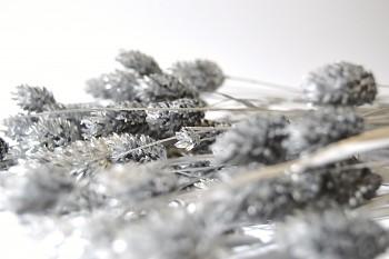 Suché a sušené květiny PHALARIS STŘÍBRNÝ
