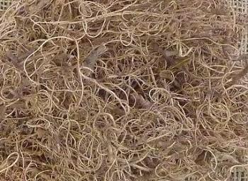 Mech Curly moose přírodní