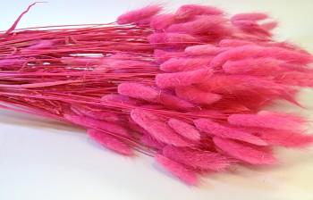 Sušené květiny Lagurus fuchsia