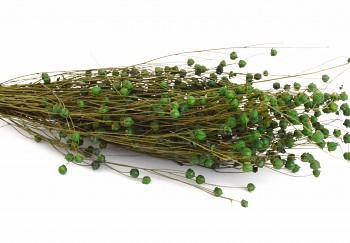 Suché a sušené květiny LEN TMAVĚ ZELENÝ