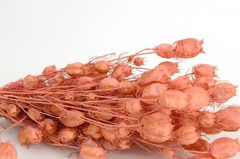 Suché a sušené květiny NIGELLA DAMASCENA LOSOSOVÁ