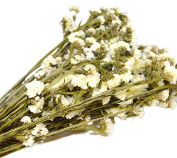 Sušené květiny  STATICE SINUATA BÍLÁ