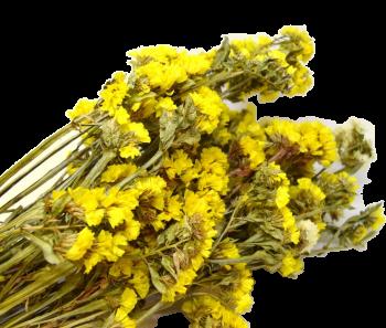 Sušené květiny  STATICE SINUATA ŽLUTÁ