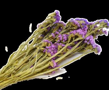 Sušené květiny  STATICE SINUATA RŮŽOVÁ