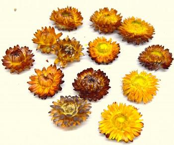 Sušené květiny  SLAMĚNKA ORANŽOVÁ