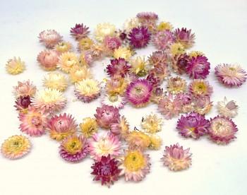 Sušené květiny  SLAMĚNKA RŮŽOVÁ