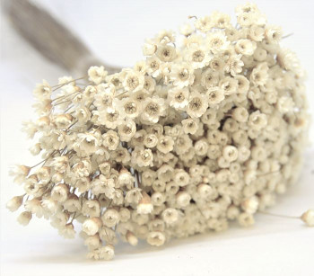 Suché a sušené květiny GLIXIA NATUR