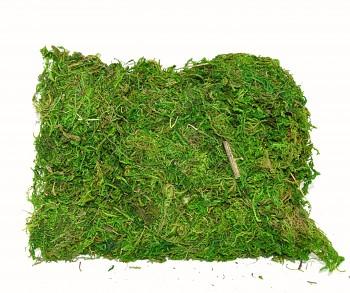 Mech přírodní zelený