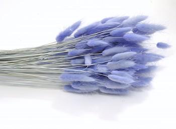Sušené květiny Lagurus violet