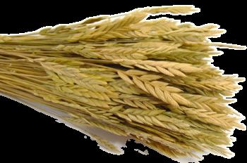 Suché a sušené květiny na aranžování SPIGA NATUR