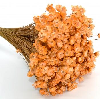 Suché a sušené květiny GLIXIA SVĚTLE ORANŽOVÁ
