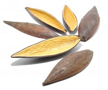 Sušený plod CANOINHA