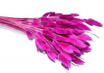 Sušené květiny LAGURUS FIALOVÝ