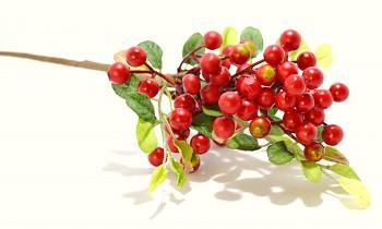 Bobule červená, podzimní dekorace