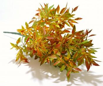 Ruscus zelenooranžový, podzimní dekorace