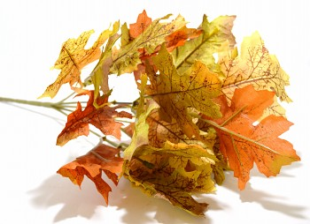 Dubové listí zelenohnědé, podzimní dekorace