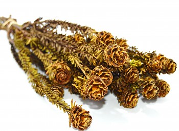 Sušené květiny TORTUM FEMALE TERACOTA
