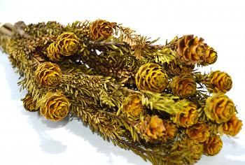 Sušené květiny TORTUM FEMALE ŽLUTÁ