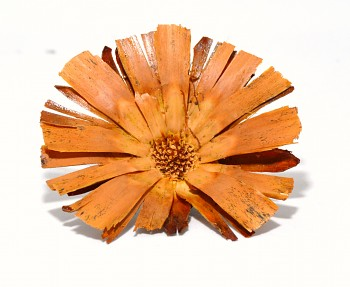 Sušené květiny SUPERCUT BEZ STONKU