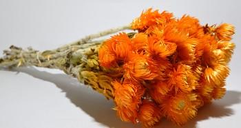 Sušené květiny SLAMĚNKA CAPBLUMEN ORANŽOVÁ