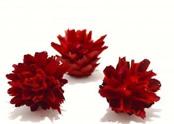 Sušené květiny PLUMOSUM ČERVENÁ