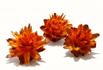 Sušené květiny PLUMOSUM ORANŽOVÁ