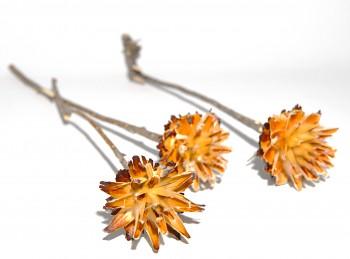 Sušené květiny PLUMOSUM NATUR SE STONKEM