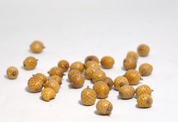 Sušené plody CANELLA