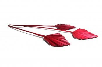 Sušené květiny PALM SPEAR MINI ČERVENÁ