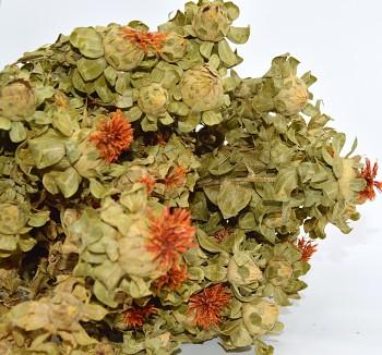 Sušené květiny na aranžování SVĚTLICE BARVÍŘSKÁ