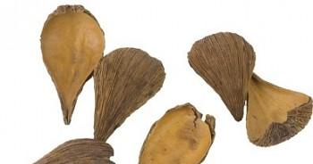 Suché plody Pradeep přírodní