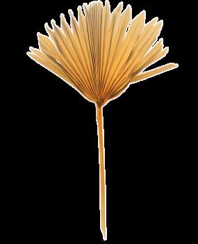 Sušené květiny PALM SUN SPEAR OKROVÝ
