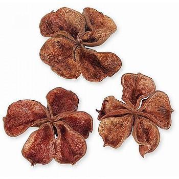 Sušené plody LAND lotus, suché plody na aranžování